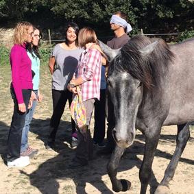 Coaching-caballos