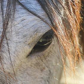 La-serena-mirada-del-caballo