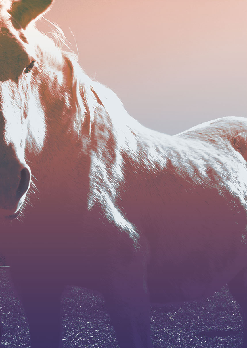 Lee más sobre el artículo 1er nivel de Reiki para Caballos