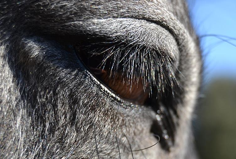 En este momento estás viendo Essence: La serena mirada del caballo
