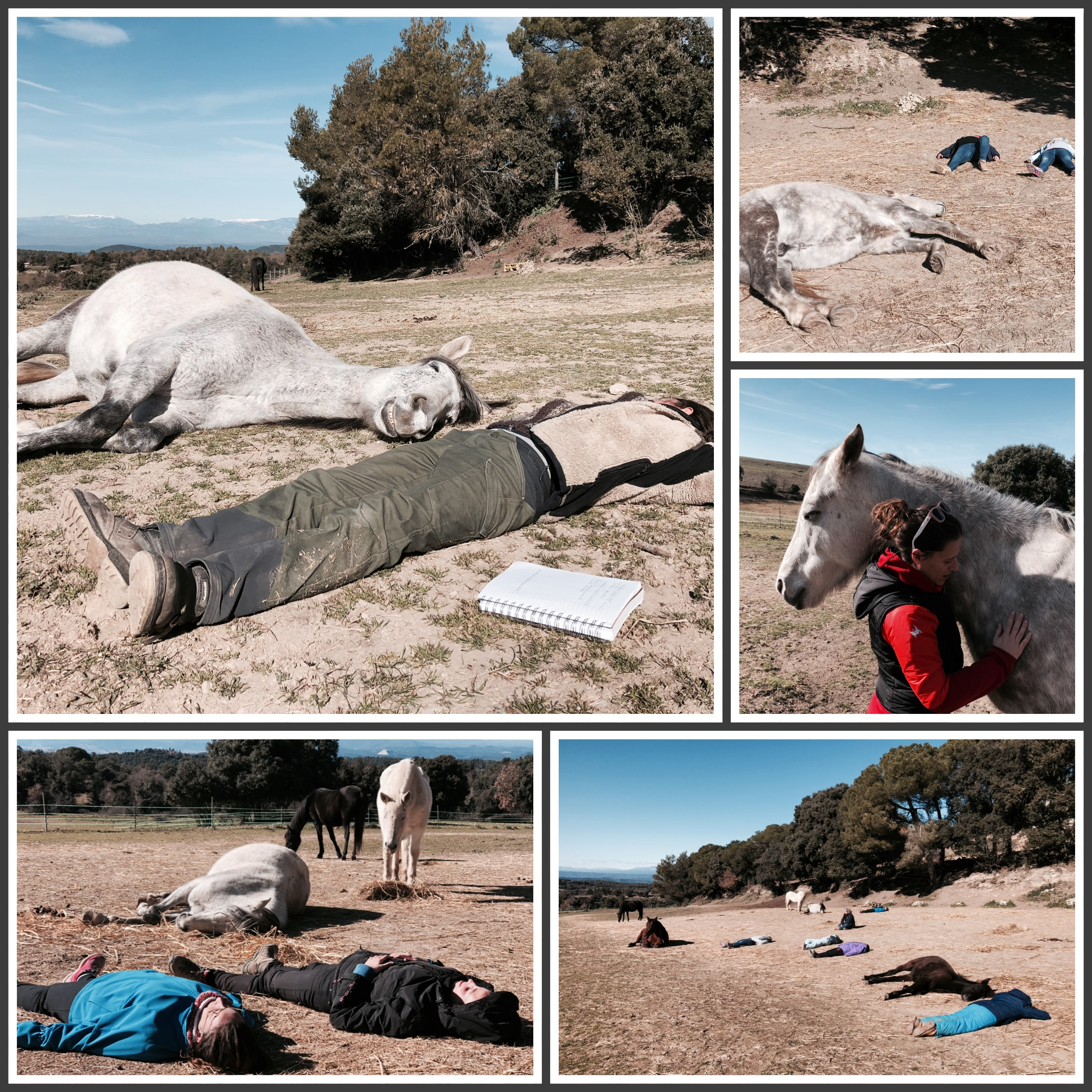 Lee más sobre el artículo Coherencia cardíaca y acompañamiento con caballos