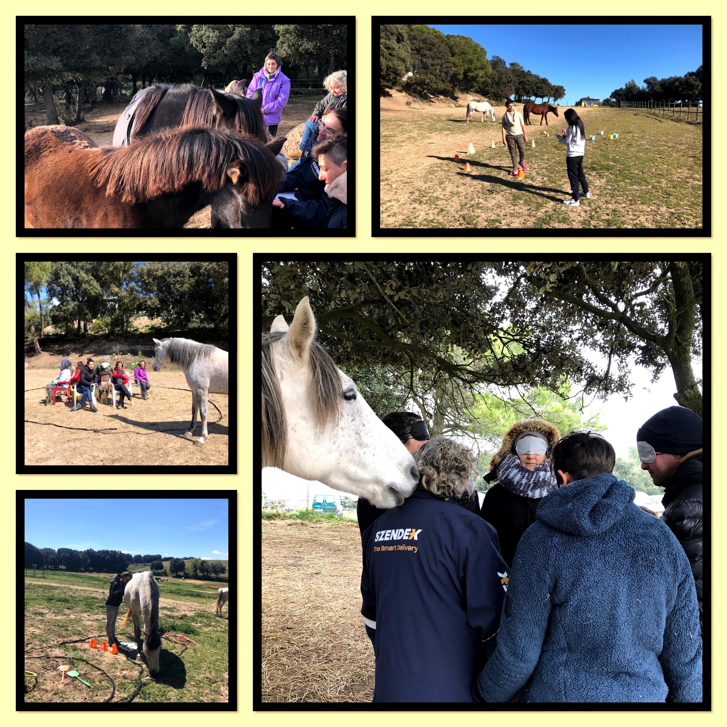 Lee más sobre el artículo Certificación en Coaching con caballos